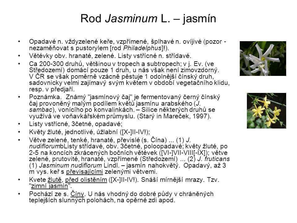 Rod Jasminum L. – jasmín Opadavé n. vždyzelené keře, vzpřímené, šplhavé n. ovíjivé (pozor - nezaměňovat s pustorylem [rod Philadelphus]!).
